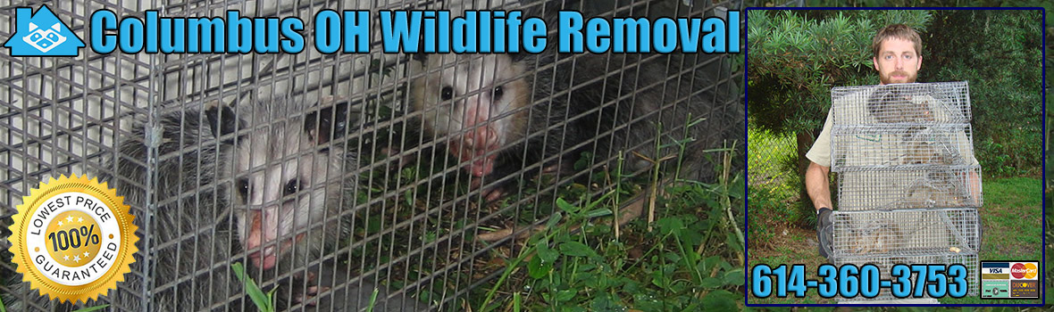 Columbus Wildlife and Animal Removal